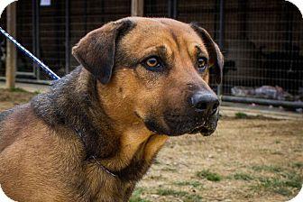 German Shepherd Dog Mix Dog for adoption in Jasper, Alabama - Buddy