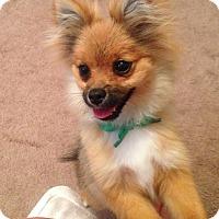 Adopt A Pet :: Tulsa - conroe, TX
