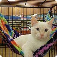 Adopt A Pet :: MOE - Powder Springs, GA