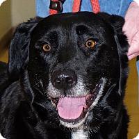 Adopt A Pet :: Mima - Spokane, WA