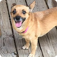 Adopt A Pet :: Aubrey - McKinney, TX