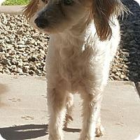 Adopt A Pet :: Rafael - Tempe, AZ