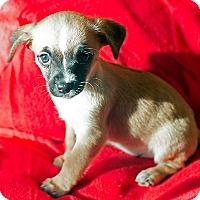 Adopt A Pet :: Emyee - Fountain Valley, CA