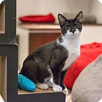 Adopt A Pet :: Cucumber - New York, NY