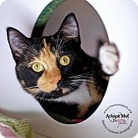 Adopt A Pet :: Estelle - Lyons, NY