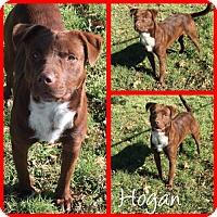 Adopt A Pet :: Hogan - Alvarado, TX