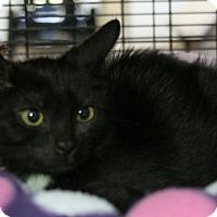 Adopt A Pet :: Moggie - Sarasota, FL