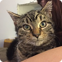 Adopt A Pet :: Mikayla - Marlton, NJ