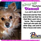 Adopt A Pet :: Diamond