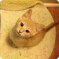 Adopt A Pet :: Charlie - Vero Beach, FL