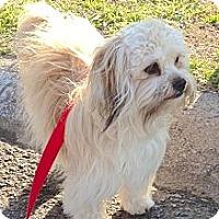Adopt A Pet :: *Royce - PENDING - Westport, CT