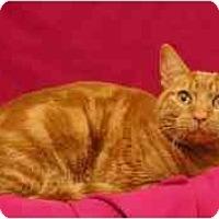 Adopt A Pet :: Doobie - Sacramento, CA