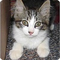 Adopt A Pet :: Hunter - Solon, OH