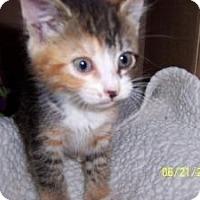 Adopt A Pet :: Sarah - Island Park, NY