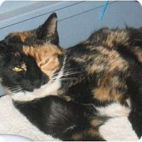 Adopt A Pet :: Callie - Scottsdale, AZ