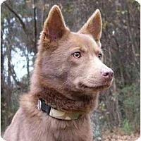 Adopt A Pet :: Cocoa - Mocksville, NC