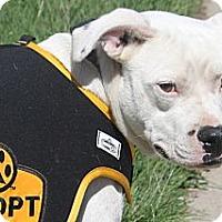 Adopt A Pet :: Ryder - Russellville, KY
