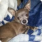 Adopt A Pet :: Jersey
