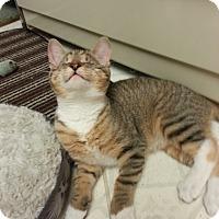Adopt A Pet :: Mimi - Stafford, VA