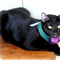Adopt A Pet :: Rhett - Dalton, GA