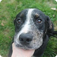 Adopt A Pet :: Marko*PENDING!* - Chicago, IL