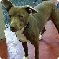 Adopt A Pet :: Banjo - Florence, IN