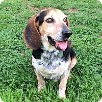 Adopt A Pet :: Ajax - Homewood, AL