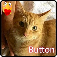 Adopt A Pet :: Button - Foster / 2015 - Maumelle, AR