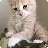 Adopt A Pet :: Maksim - Mount Laurel, NJ