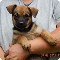 Adopt A Pet :: Jade (5 lb) Video! - SUSSEX, NJ