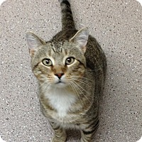 Adopt A Pet :: Benny - Willmar, MN