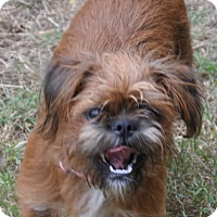 Adopt A Pet :: Malla - Lebanon, TN