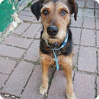 Adopt A Pet :: Ace - Philadelphia, PA