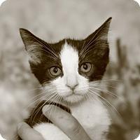 Adopt A Pet :: Neville - Baytown, TX