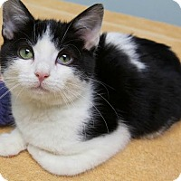 Adopt A Pet :: Holly - Montclair, NJ