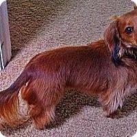 Adopt A Pet :: Oscar - San Jose, CA