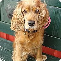 Adopt A Pet :: Rusty - Sugarland, TX