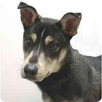 Adopt A Pet :: Tyler - Port Washington, NY