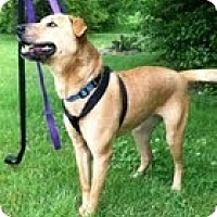 Adopt A Pet :: Daffodil (In New England) - Brattleboro, VT