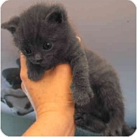 Adopt A Pet :: Patrick - Davis, CA
