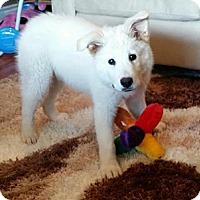 Adopt A Pet :: Alec - Saskatoon, SK