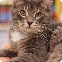 Adopt A Pet :: Benson - Sacramento, CA
