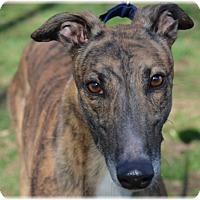 Adopt A Pet :: Poppin - Harrisburg, PA