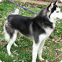 Adopt A Pet :: Benicio - Zanesville, OH