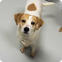 Adopt A Pet :: Savannah - Prison Program Dog - Hartford, KY