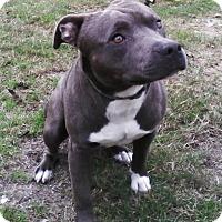 Adopt A Pet :: Ozzie - Edisto Island, SC