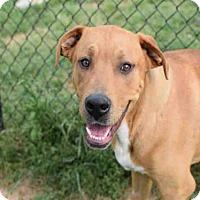 Adopt A Pet :: VAN GOGH - Atlanta, GA