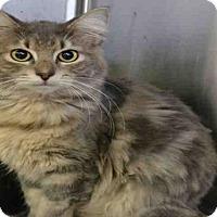 Adopt A Pet :: CORN CHIP - Atlanta, GA