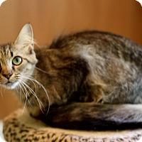 Adopt A Pet :: Stella - Dalton, GA