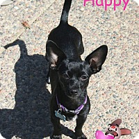 Adopt A Pet :: Happy - Concord, CA